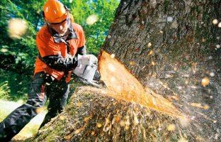 Удаление деревьев по цене от 450 р