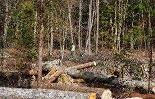 Валка леса по цене от 550 руб./м3
