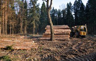 Вырубка леса по цене от 350 руб./м2